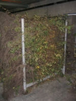 Carpinus Betulus 1+2 BW 150/175