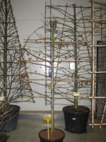 Carpinus Betulus SCHERM 110x220 C45