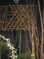 Carpinus betulus  LEIVORM 1ste tak op 200cm