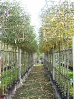 Malus domestica LEI Appelbomen in soorten 12/14 C35